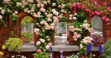 Как озеленить зону отдыха беседку и забор вьющимися растениями